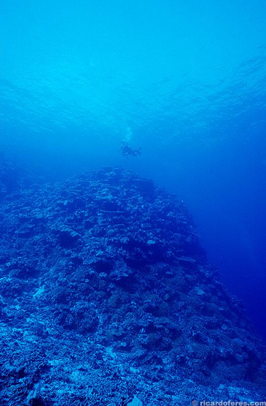 A visibilidade é impressionante: essa foto foi feita a 40 metros de profundidade!