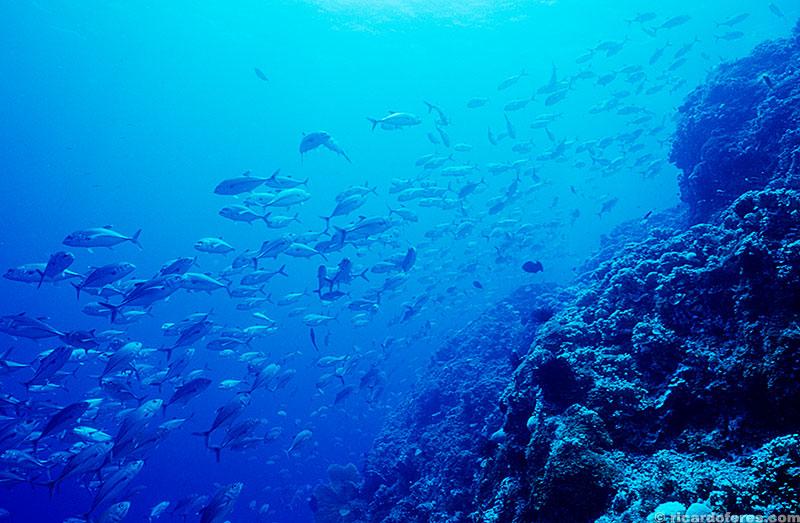 Muitos mergulhos no Mar de Coral são feitos descendo direto para os 40 metros e subindo lentamente, observando a espetacular vida marinha.