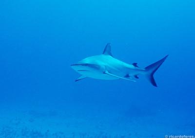 Shark Zoo, Austrália