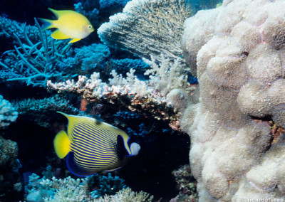Diving on the Great Barrier Reef and Coral Sea, Australia