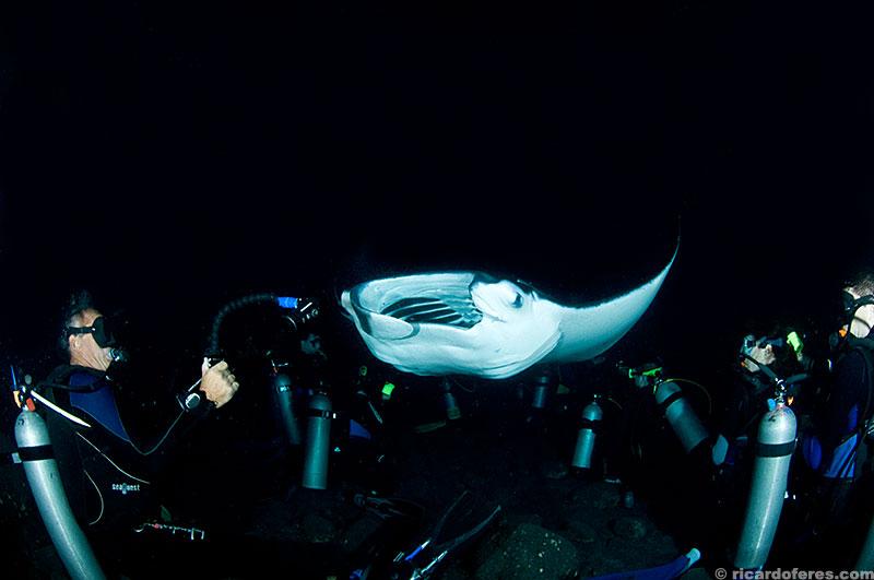 Arraia manta comendo o plâncton que é atraído pela luz de filmagem