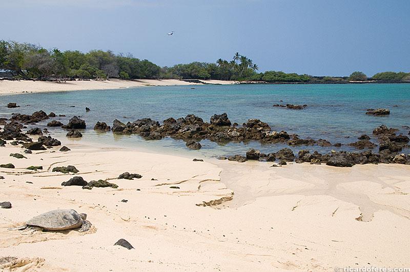 Tartaruga descansando em Mahailua