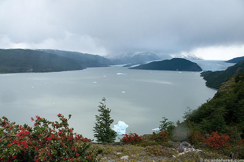 Glaciar e lago Grey