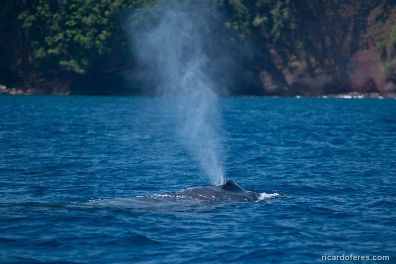 2016-03-29-0978-humpback-whale