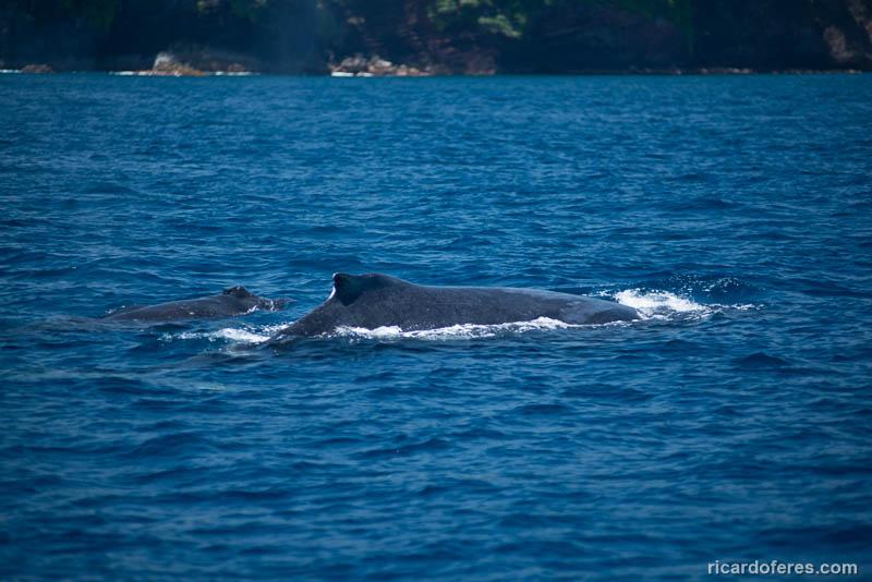 2016-03-29-0979-humpback-whale