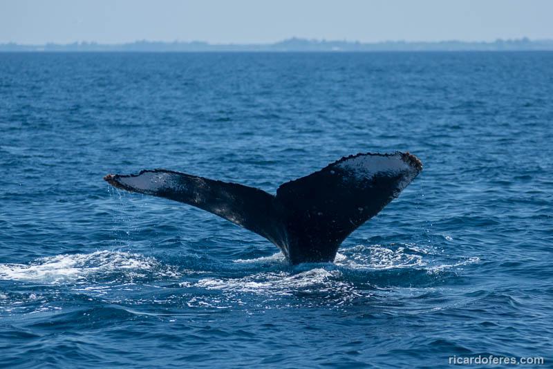 2016-03-29-0995-humpback-whale