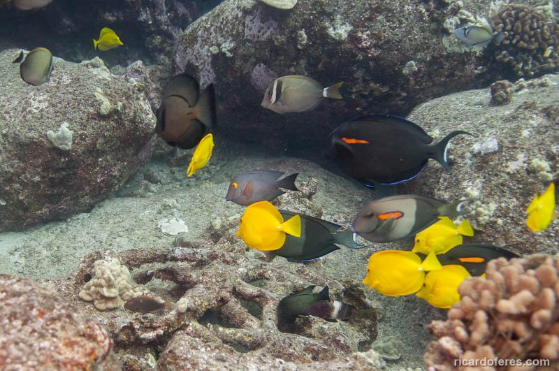 2016-05-03-2294-peixes-em-south-point