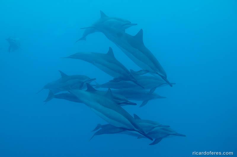 2016-05-08-2332-golfinhos-em-kealakekua-bay